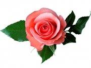 Фотопечать на потолке: Цветы 40