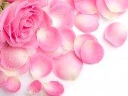Фотопечать на потолке: Цветы 47