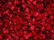Фотопечать на потолке: Цветы 50