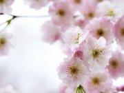 Фотопечать на потолке: Цветы 52