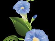 Фотопечать на потолке: Цветы 58
