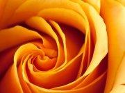 Фотопечать на потолке: Цветы 61