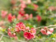 Фотопечать на потолке: Цветы 65