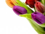 Фотопечать на потолке: Цветы 70