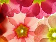 Фотопечать на потолке: Цветы 71
