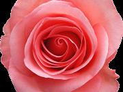 Фотопечать на потолке: Цветы 77