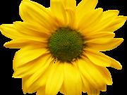 Фотопечать на потолке: Цветы 82