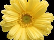 Фотопечать на потолке: Цветы 83