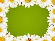 Фотопечать на потолке: Цветы 89