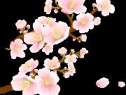 Фотопечать на потолке: Цветы 90