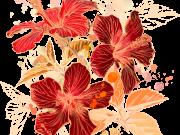 Фотопечать на потолке: Цветы 91