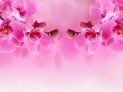 цветы и цветочные композиции (36)