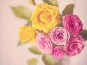цветы и цветочные композиции (37)