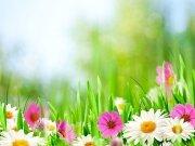 цветы и цветочные композиции (38)