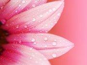 цветы и цветочные композиции (40)