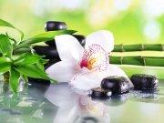 цветы и цветочные композиции (42)