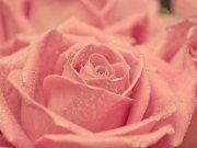цветы и цветочные композиции (43)