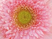цветы и цветочные композиции (44)