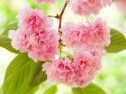 цветы и цветочные композиции (45)