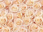 цветы и цветочные композиции (46)