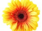 Фотообои на стену: Цветы 1