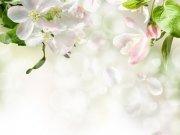 Фотообои на стену: Цветы 10