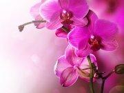 Фотообои на стену: Цветы 19