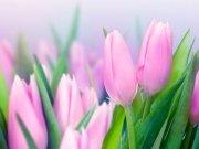 Фотообои на стену: Цветы 22