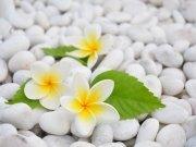 Фотообои на стену: Цветы 25