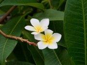Фотообои на стену: Цветы 26