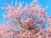 Фотообои на стену: Цветы 27