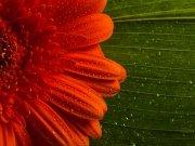 Фотообои на стену: Цветы 28
