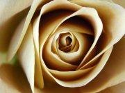 Фотообои на стену: Цветы 3