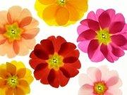 Фотообои на стену: Цветы 4