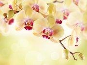 Фотообои на стену: Цветы 6