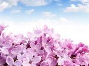 Фотообои на стену: Цветы 9