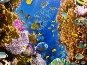 Фотообои на стену: Подводный мир 1