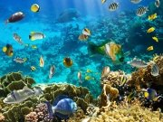 Фотообои на стену: Подводный мир 2