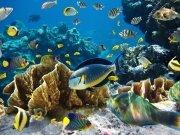 Фотообои на стену: Подводный мир 4