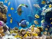 Фотообои на стену: Подводный мир 7