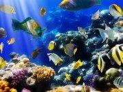 Фотообои на стену: Подводный мир 8