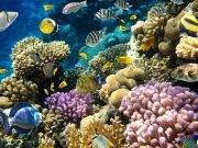 Фотообои на стену: Подводный мир 12