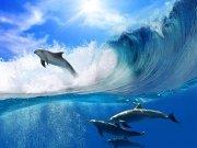 Фотообои на стену: Подводный мир 14