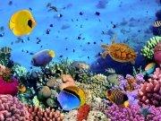 Фотообои на стену: Подводный мир 15