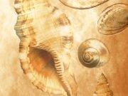 Фотообои на стену: Текстура 10