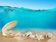 моря и океаны (37)