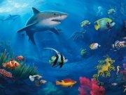 Фотопечать на потолке: Подводный мир (127)