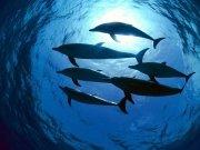 Фотопечать на потолке: Подводный мир (130)