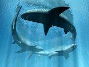 Фотопечать на потолке: Подводный мир (131)
