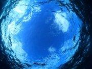 Фотопечать на потолке: Подводный мир (132)